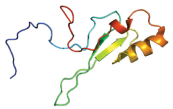 Image: Structure of the MECP2 protein (Photo courtesy of Wikimedia Commons).